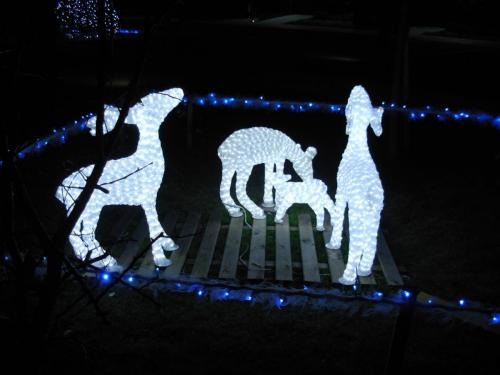 animali-luminarie