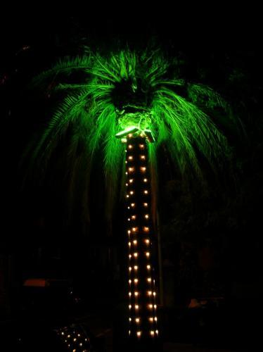 palma-illuminata